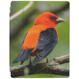 Scarlet Tanager iPad Smart Cover iPad Cover