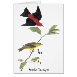 Scarlet Tanager - John James Audubon Card