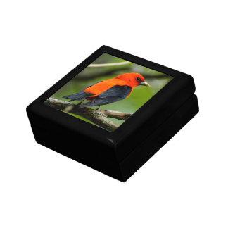 Scarlet Tanager Keepsake Gift Box