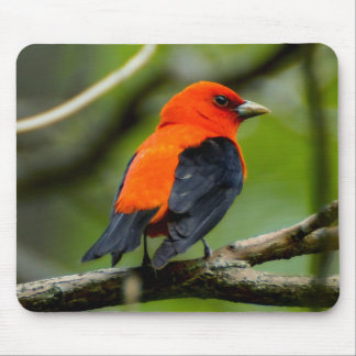 Scarlet Tanager Mouspad Mouse Pad