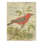Scarlet Tanager Vintage Bird Birdcage Dragonfly Postcard