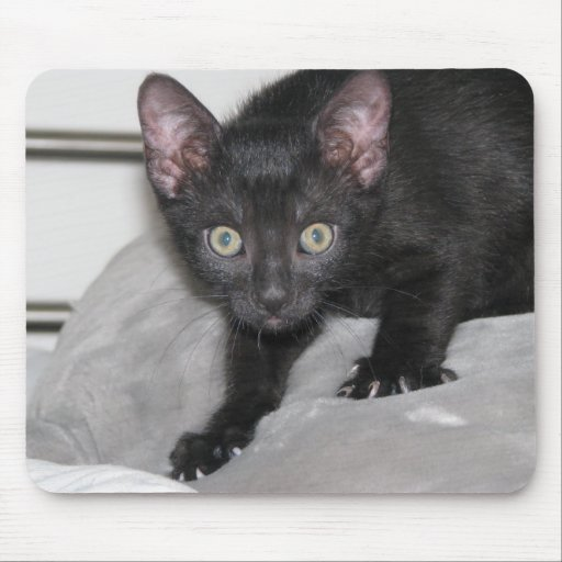 scary cat mousepad