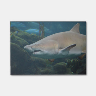 Scary Great White Shark Post-it® Notes