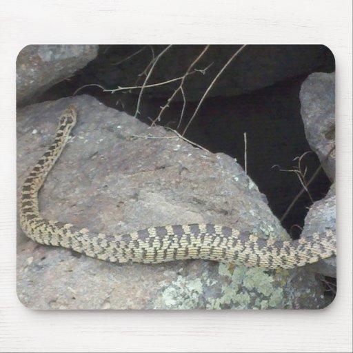 Scary Snake up Close! Mousepads