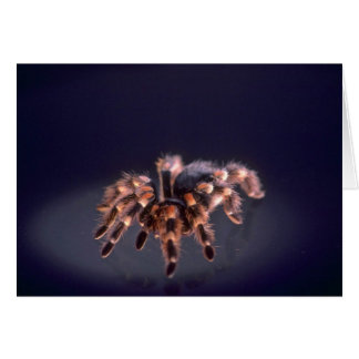 Scary Tarantula spider Card
