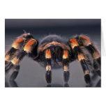 Scary Tarantula spider Greeting Card