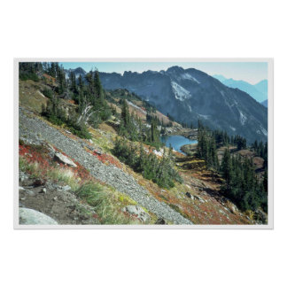 Scattered Trees On A Mountain Slope, Poster