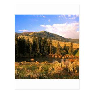 Scene Lamar Valley Yellowstone Wyoming Postcard