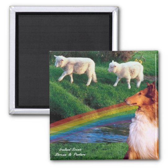 Scenic Ireland Stream with Collie and Sheep Magnet
