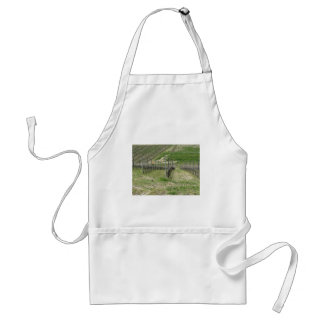 Scenic view of rolling hillside with vineyards standard apron