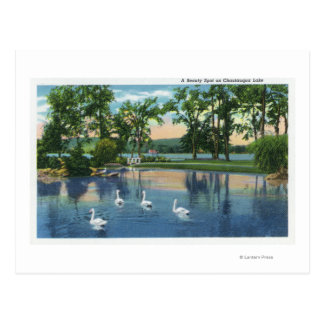 Scenic View of Swans on the Lake Postcard