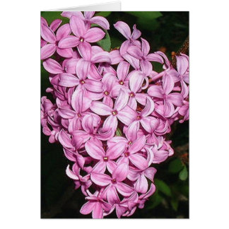 Scent of LIlacs Card