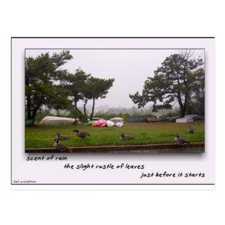 Scent of Rain Postcard