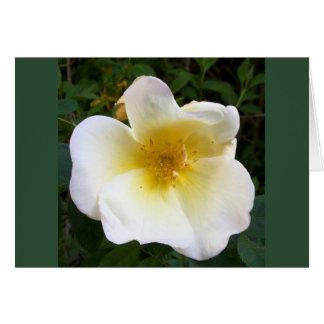 Scented Cream Rose Greeting Card