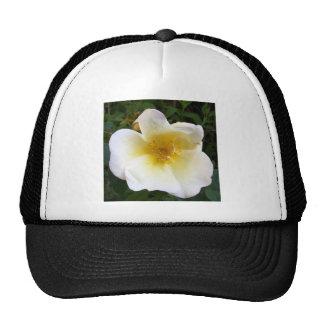 Scented Cream Rose Hats