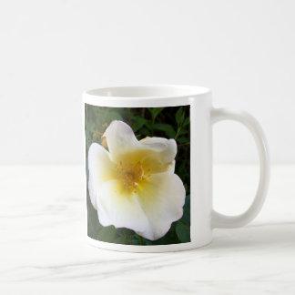 Scented Cream Rose Coffee Mug