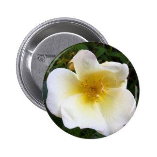 Scented Cream Rose Pin