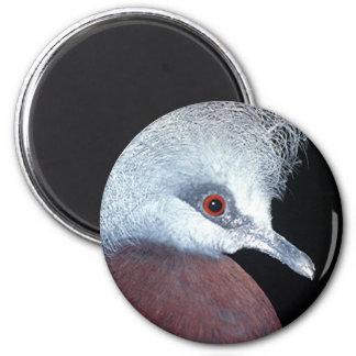 scheepmaker crown pigeon 6 cm round magnet