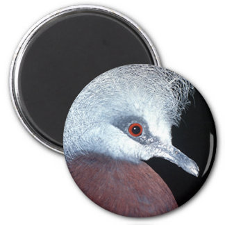 scheepmaker crown pigeon refrigerator magnet