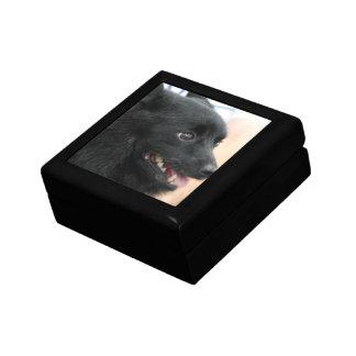 Schipperke Gift Box