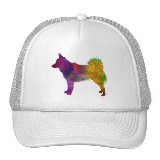 Schipperke in watercolor cap