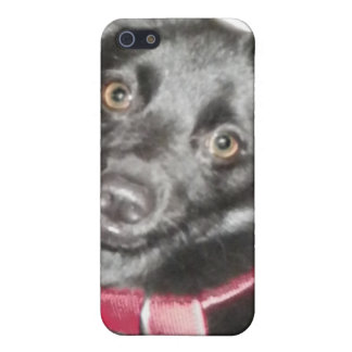 Schipperke Picture iPhone 5 Cover