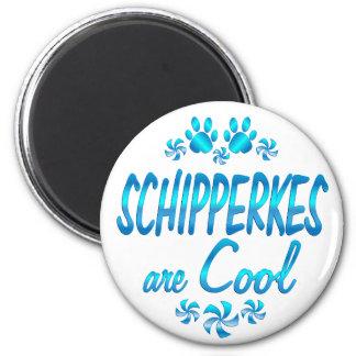 Schipperkes are Cool Magnet