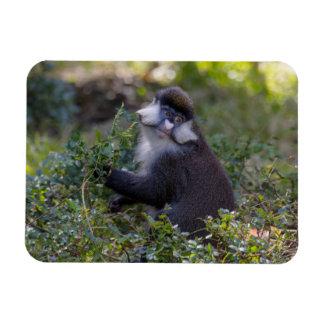 Schmidt's spot-nosed Monkey Magnet