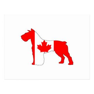 Schnauzer Canada Postcard