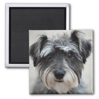 Schnauzer Dog Square Magnet