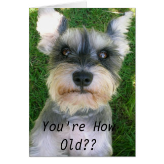 Schnauzer Happy Bday Card
