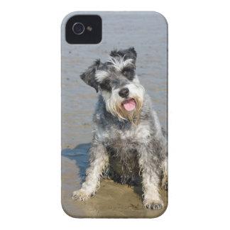 Schnauzer miniature dog cute photo at beach, gift iPhone 4 Case-Mate case