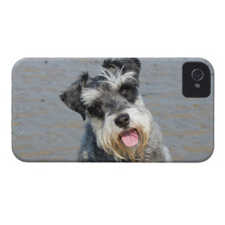 Schnauzer miniature dog cute photo portrait, gift iPhone 4 cover