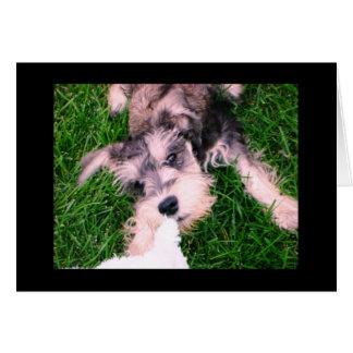 """Schnauzer Puppy--""""Let Go!"""" Card"""