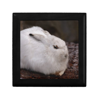 Schneehase Cute Zoo Animal Animal World Fur Hare Gift Box