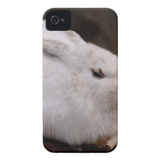 Schneehase Cute Zoo Animal Animal World Fur Hare iPhone 4 Cases