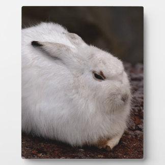 Schneehase Cute Zoo Animal Animal World Fur Hare Plaque