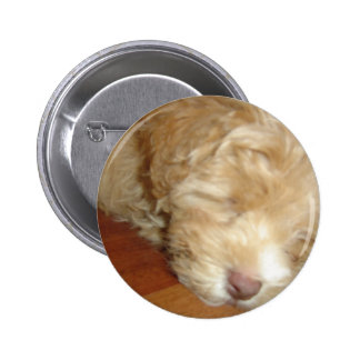 Schnoodle Puppy Sleeping Button