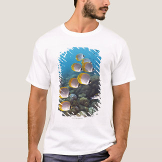 School of angelfish T-Shirt