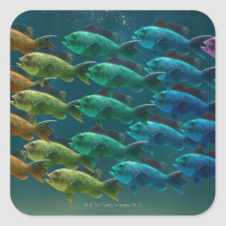 School of black sea bass in the colors of the square sticker