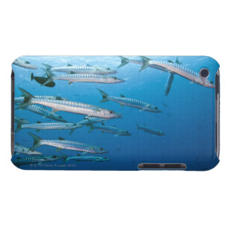 School of blackfin barracuda (Sphyraena qenie) iPod Touch Covers
