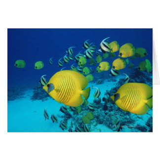 School of Butterfly Fish Swimming on the Seabed Card