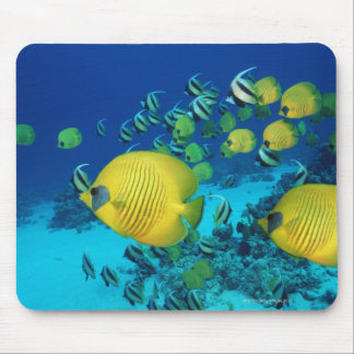 School of Butterfly Fish Swimming on the Seabed Mouse Pad