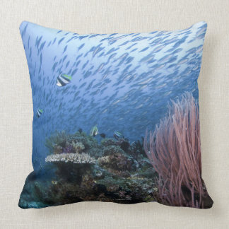 School of fish above reef pillow