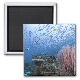 School of fish above reef refrigerator magnet