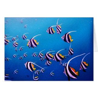 School of Fish, Banda Neira Card