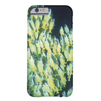 School of Fish Barely There iPhone 6 Case