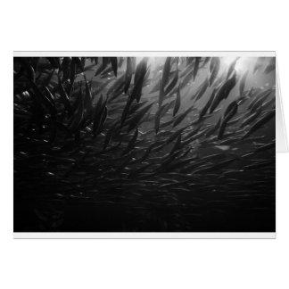 school of fish greeting card