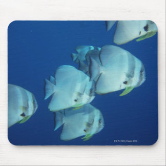 School of Fish Mouse Pads