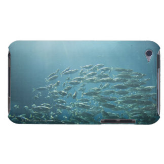 School of fish, Nassau, Bahamas iPod Touch Case-Mate Case